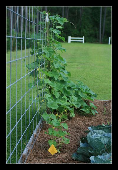 garden b15.jpg